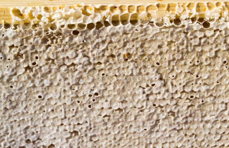 被密封的蜂蜜梳子 图库摄影