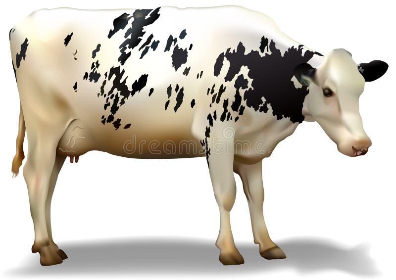 被察觉的母牛 向量例证