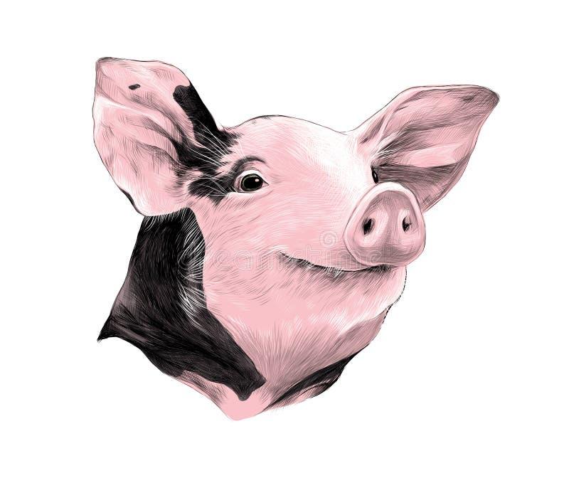 被察觉的猪剪影传染媒介头  皇族释放例证