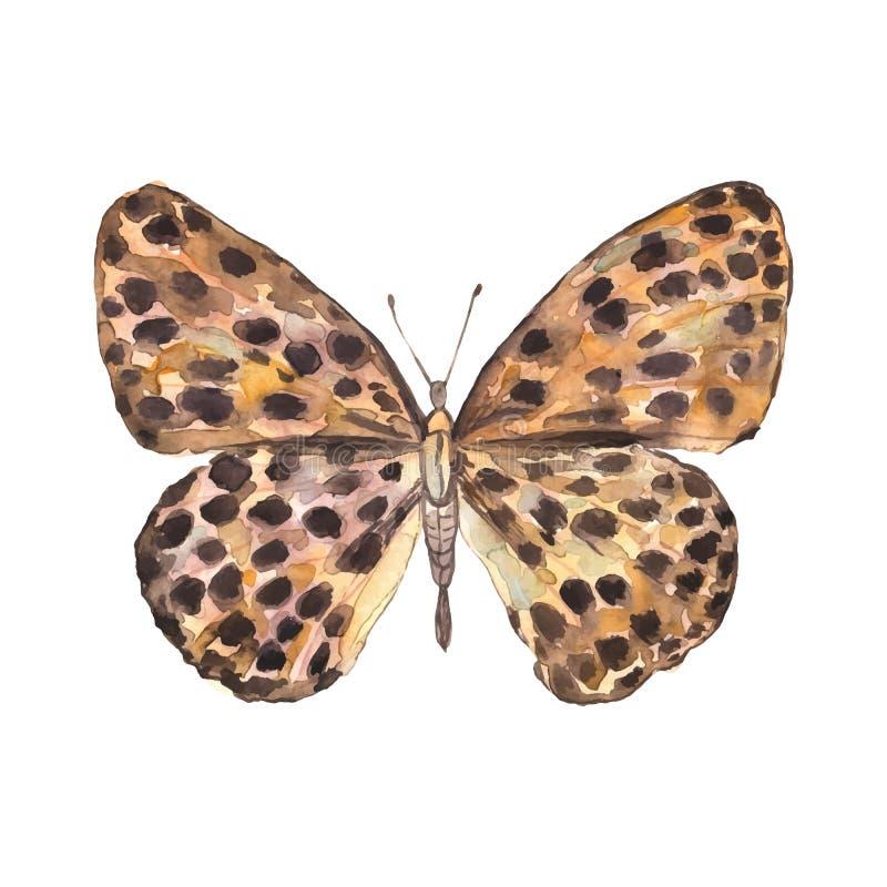 被察觉的美丽的水彩蝴蝶 向量 库存例证