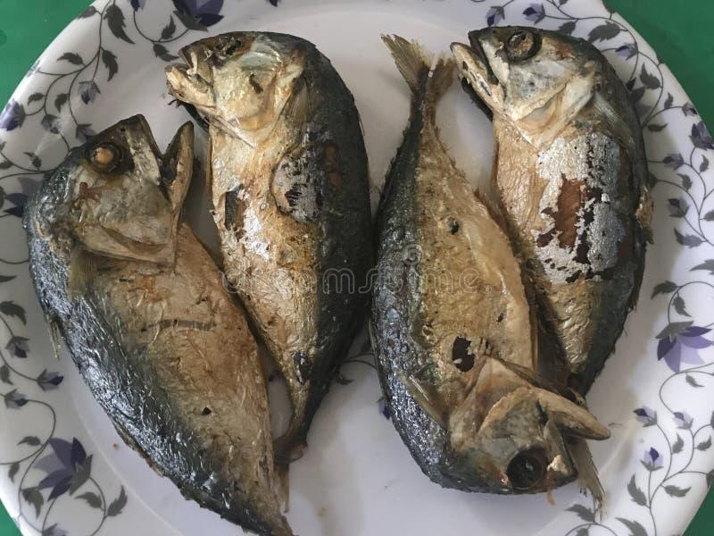 被射击的鲭鱼 库存图片