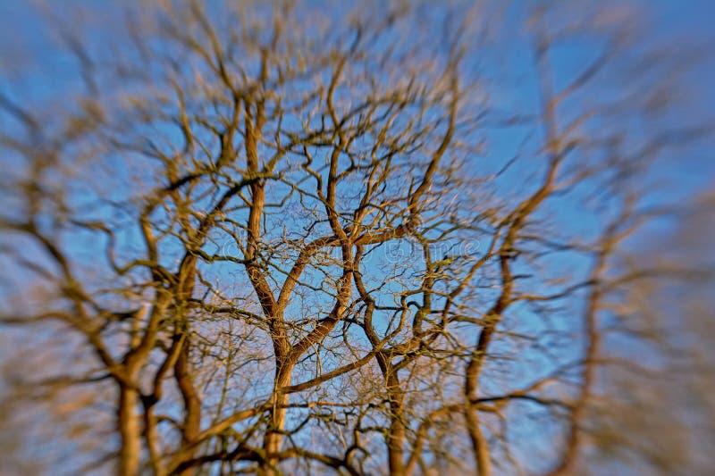被弄脏的光秃的树枝背景反对蓝天的 免版税库存照片