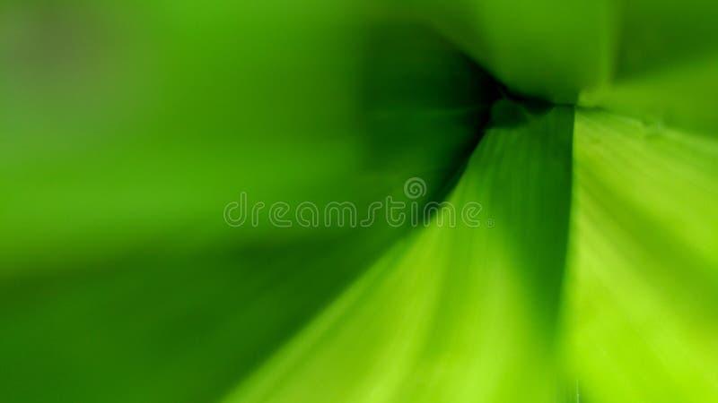被弄脏的抽象绿色自然背景纹理软 免版税库存照片
