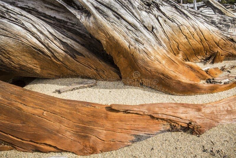 被弄脏的漂流木头片断在Flagstaff湖绊倒在缅因 免版税图库摄影