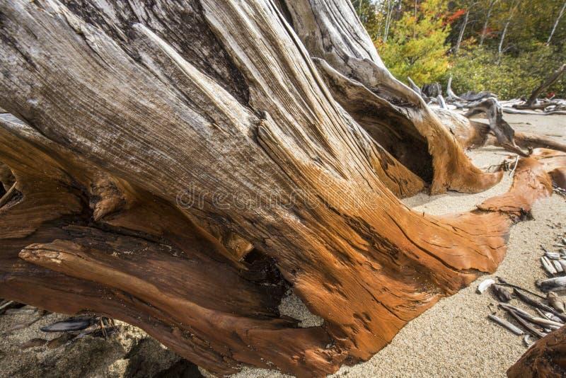 被弄脏的漂流木头片断在Flagstaff湖绊倒在缅因 库存图片