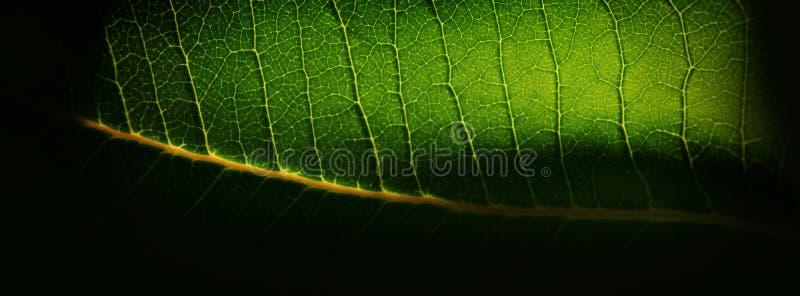 被弄脏的背景、绿色植物叶子和黄色血丝 网 免版税图库摄影
