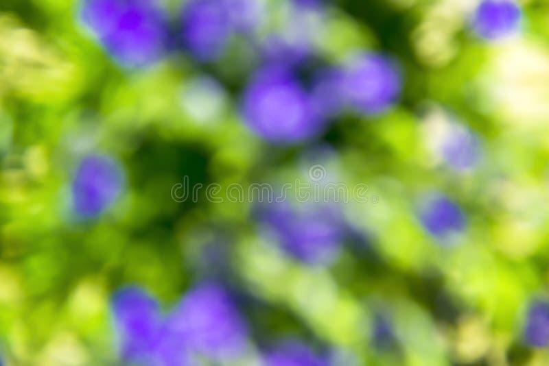 被弄脏的背景许多蓝色花种植蝴蝶花绿色绿色绿色花束领域 图库摄影