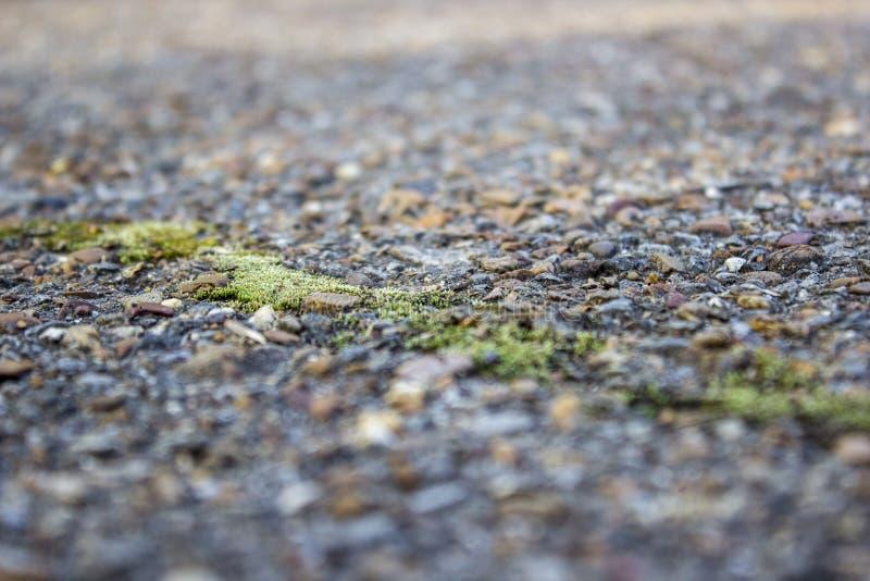 被弄脏的背景,在老沥青的一个裂缝,长满与绿色青苔 免版税图库摄影