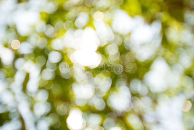 被弄脏的轻的bokeh和绿色bokeh从绿色树 免版税库存图片