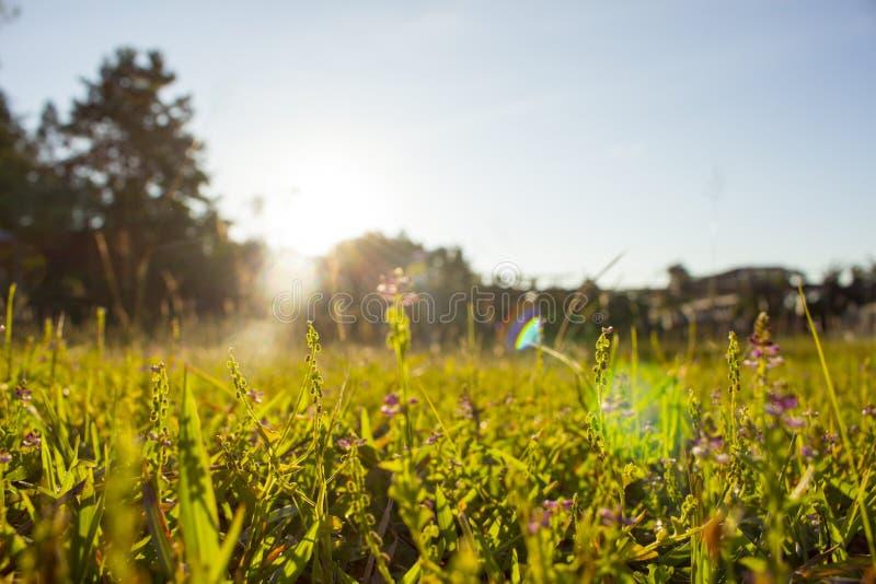 被弄脏的紫色草花摘要阳光 免版税库存照片