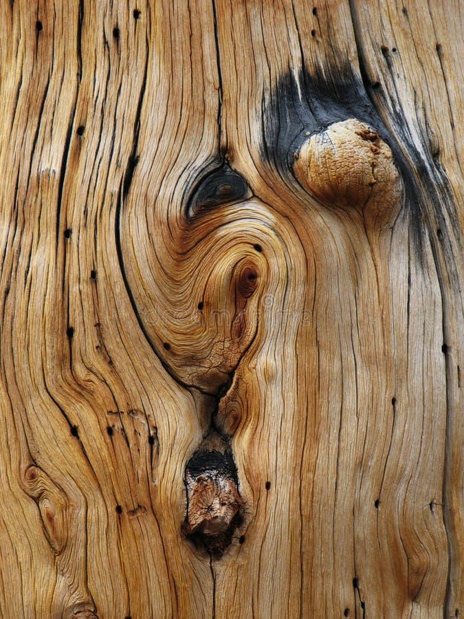 被打结的杉木树干 库存照片