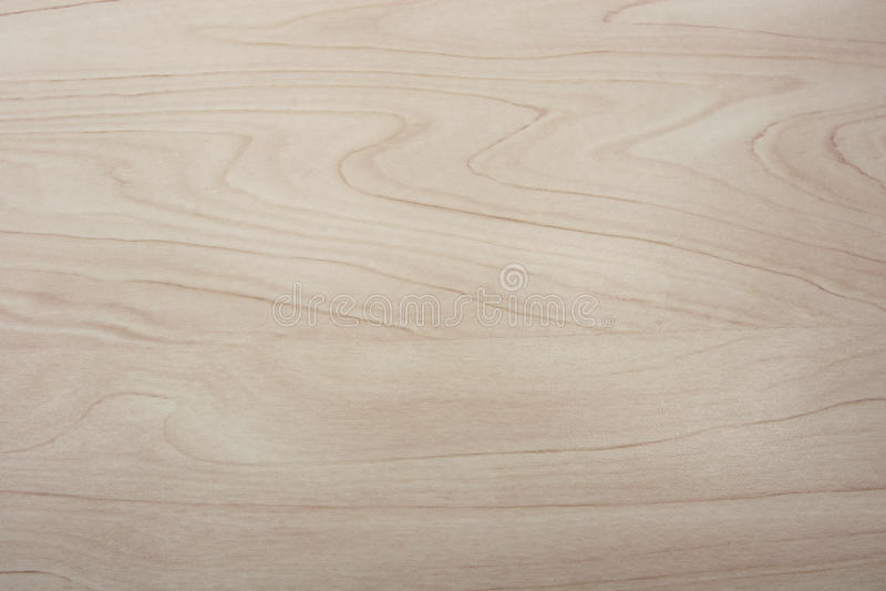 被挤奶的桦树木头五谷纹理 图库摄影