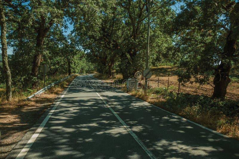 被排行的树遮蔽的乡下路 库存照片