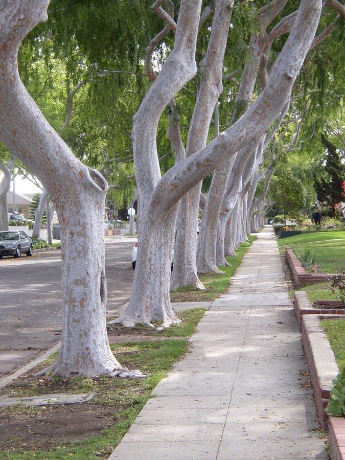 被排行的边路结构树 免版税库存图片