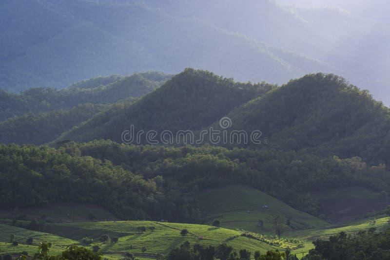 被排行的绿色露台的米领域和农夫房子的风景在山后的与阴影点燃 图库摄影