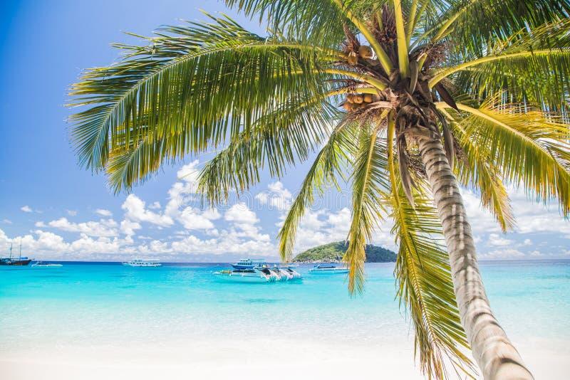 被接触的热带海滩在similan海岛 免版税库存图片