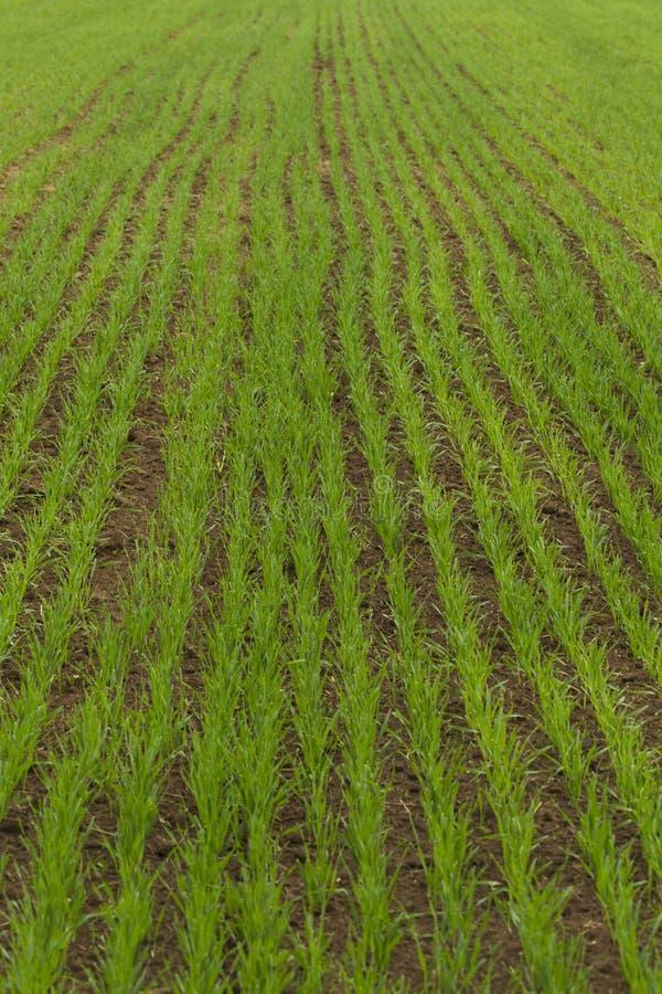 Download 被播种的农田 库存图片. 图片 包括有 行业, 自然, 适当, 幼木, 眼镜, 产品, 食物, 问题的, 健康 - 72361437
