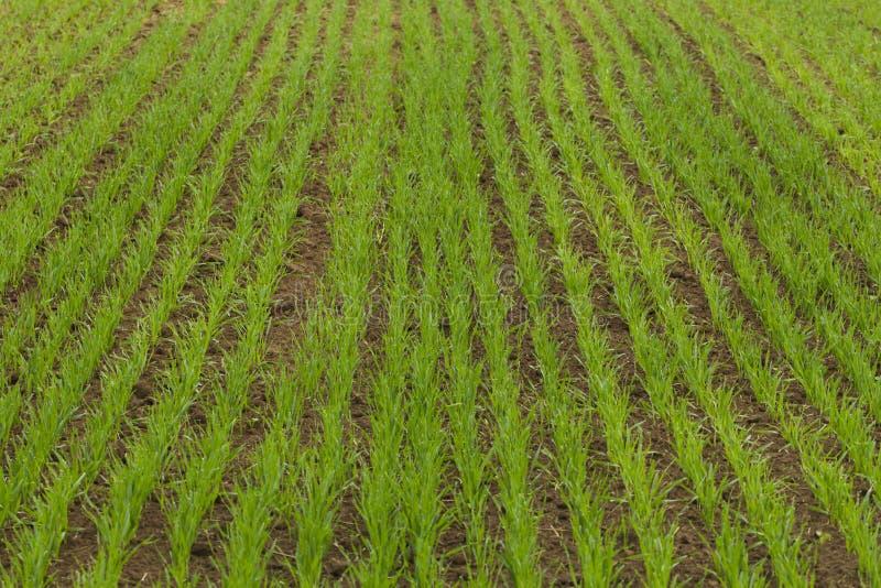 Download 被播种的农田 库存照片. 图片 包括有 行业, 种田, 幼木, 适当, browne, 动物区系, 健康 - 72362680