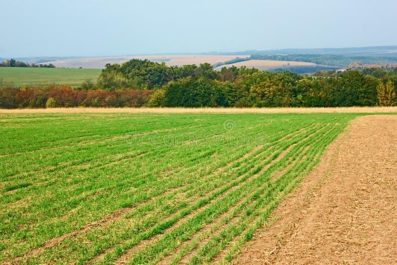 被播种的麦田边缘临近森林 库存照片