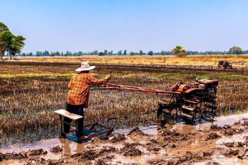 被收获了和为下米种植做准备的米领域 图库摄影