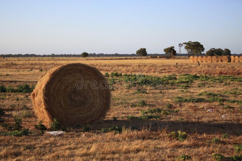 被收获的大包在农田里在维多利亚,澳大利亚 库存照片