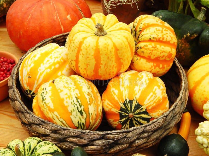 被收获的庄稼 在一个柳条盘的明亮的黄色和橙色南瓜 免版税库存照片