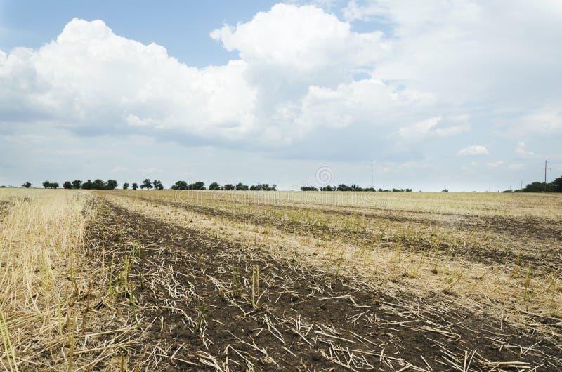 被收获的油菜 在harvestBeautiful风景以后的领域 免版税库存照片