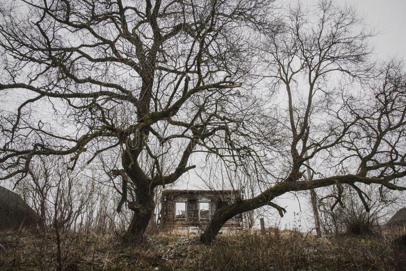 被放弃的和故障的房子由两棵巨大的树守卫了 免版税库存照片