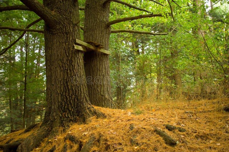 被放弃的堡垒结构树 库存照片