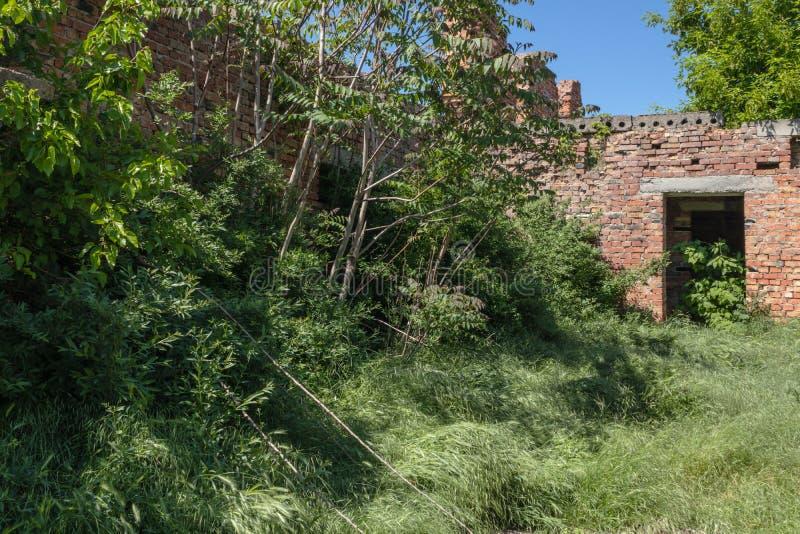 被放弃的大厦从完全地长满的时间倒塌与树和草 库存图片