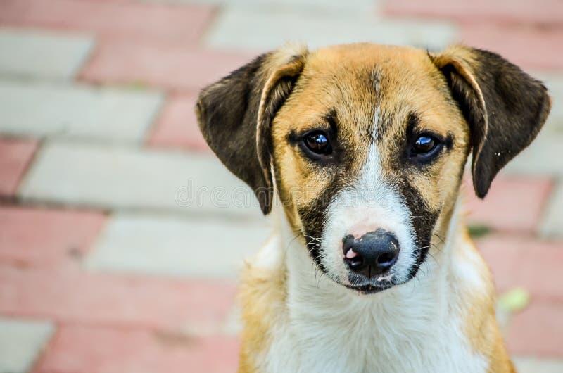 被放弃的小狗流浪狗 免版税库存图片