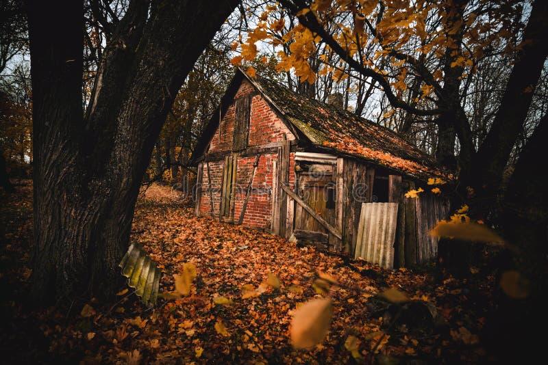 被放弃的房子在秋天上色了森林 库存图片