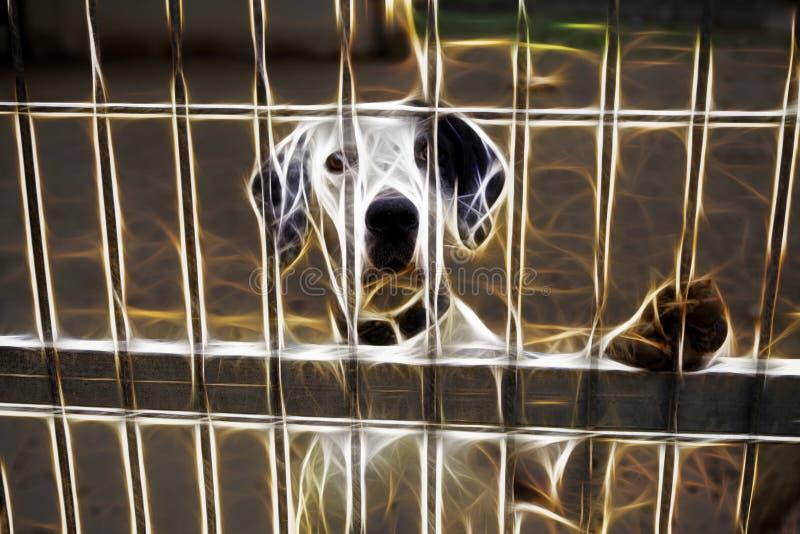 被放弃的狗和关进笼子 向量例证