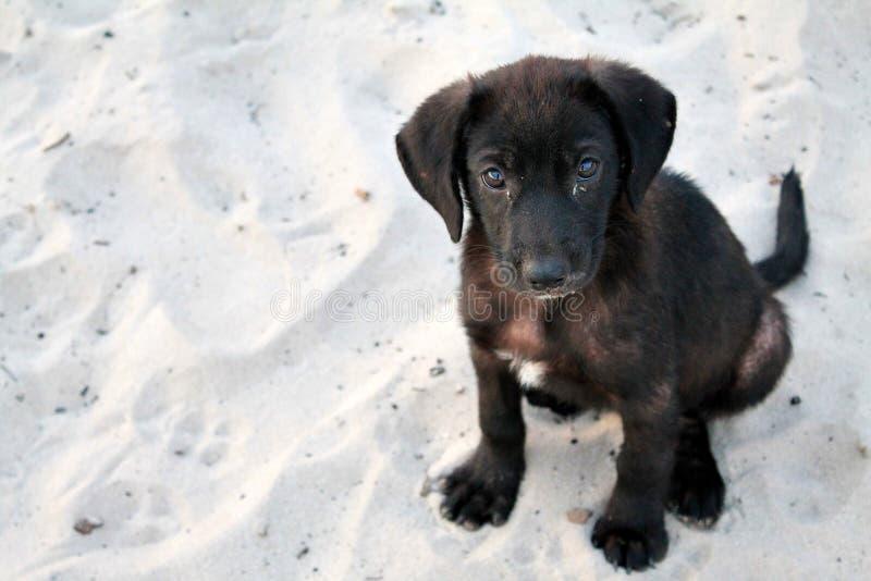 被放弃的狗 免版税库存照片