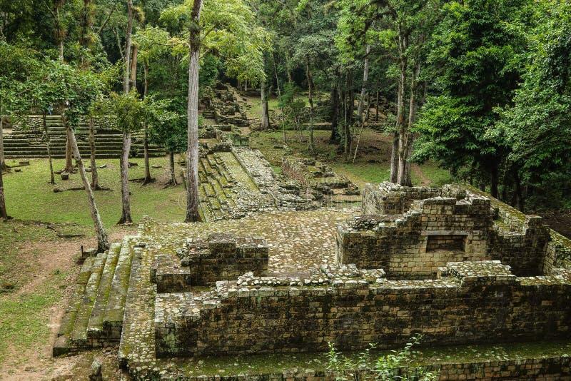 被放弃的玛雅寺庙, Copan,洪都拉斯 免版税库存图片