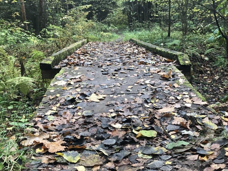 被放弃的秋天桥梁在森林经常 库存图片