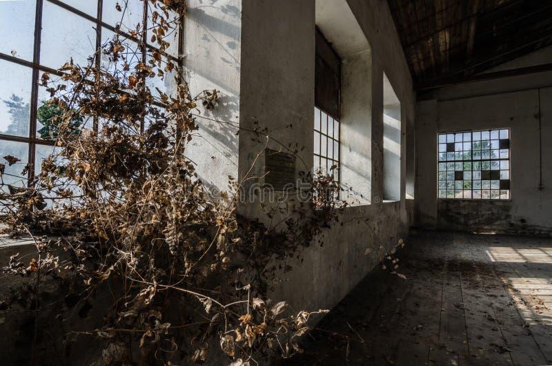 被放弃的老工厂 免版税库存图片