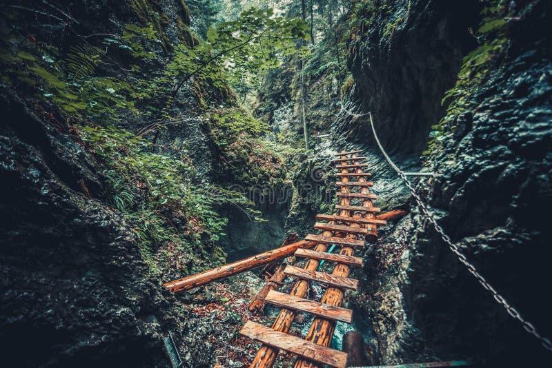被放弃的老木桥在密林森林里 免版税库存照片