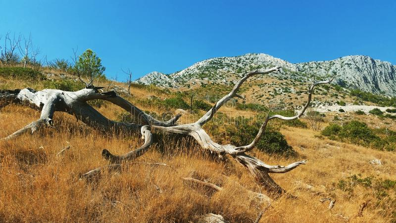 被放弃的老树 库存图片
