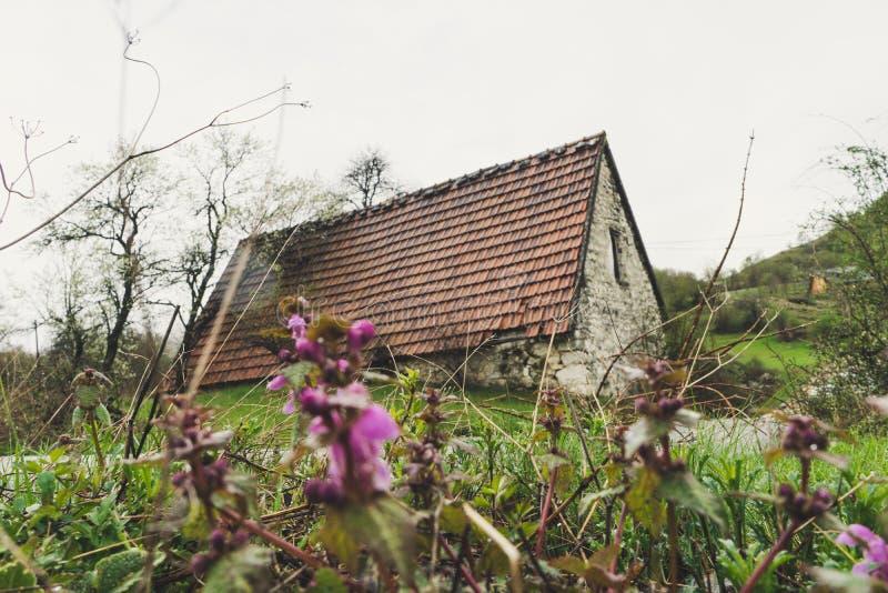 被放弃的老石头农村房子 村庄房子 流浪汉在森林困扰了石房子和土路 树白色开花 图库摄影