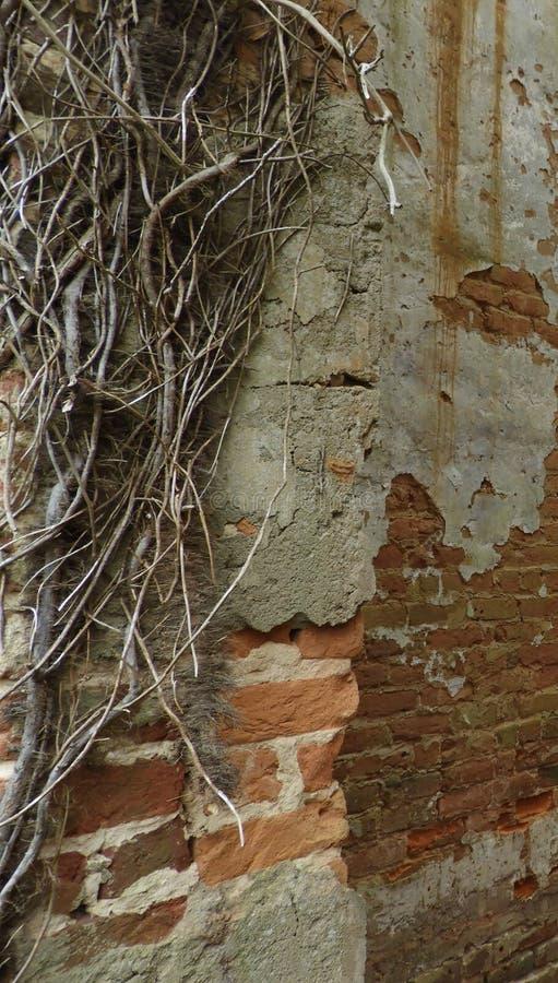 被放弃的老落寞烧了在房子下在北卡罗来纳 免版税图库摄影