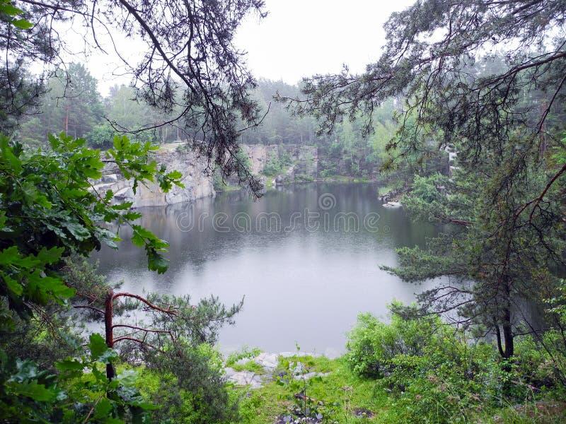 被放弃的被充斥的猎物在森林地质露出的森林湖 免版税库存照片