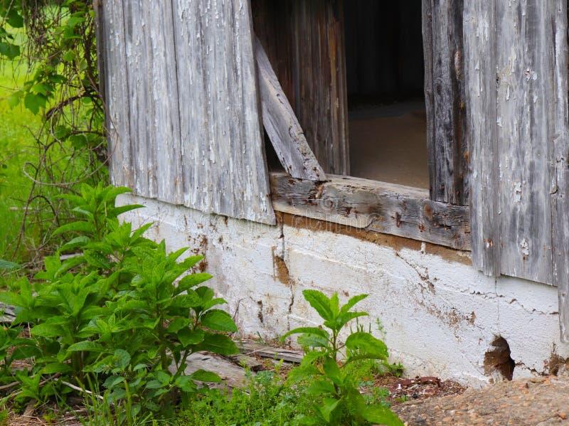 被放弃的谷仓艺术性的看法有杂草的 库存图片