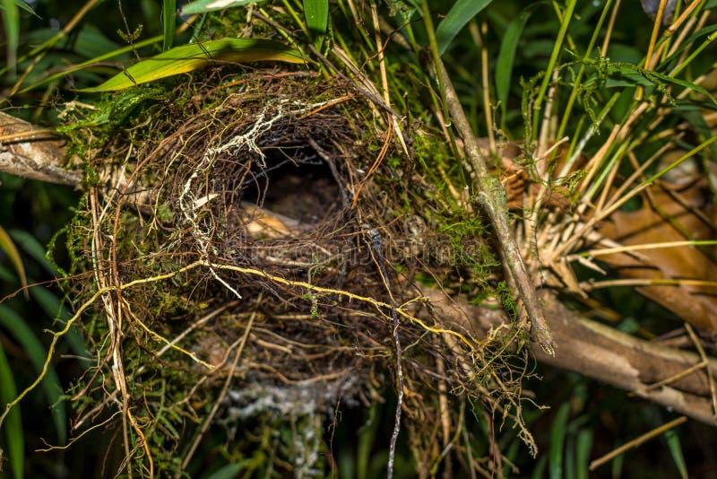 被放弃的鸟巢 库存图片