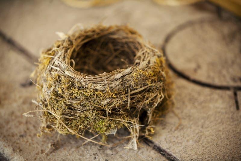 被放弃的鸟的巢 免版税库存图片