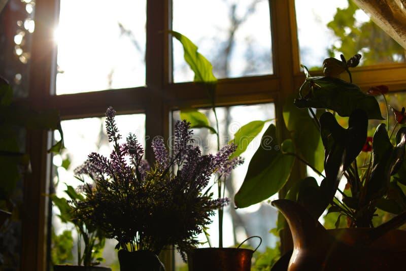 被日光照射了室内植物美丽的景色  免版税库存照片