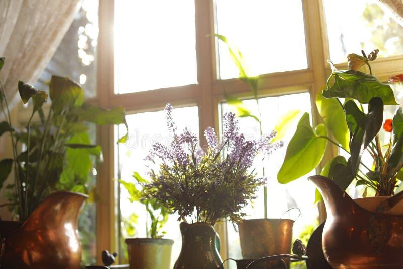 被日光照射了室内植物美丽的景色  库存图片
