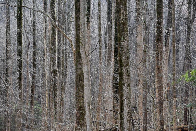 被日光照射了有花边的冷漠的森林 库存照片