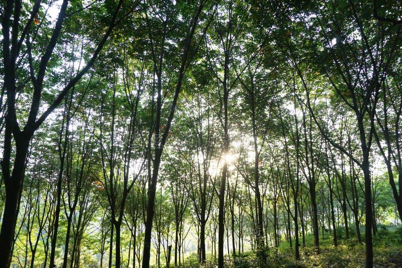 被日光照射了树在庭院里 库存照片