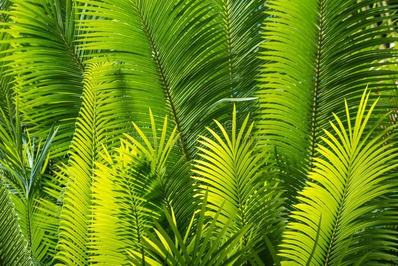 被日光照射了棕榈叶 库存照片
